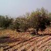 La Junta pide al Gobierno central que actúe para paliar los efectos de la sequía