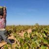La Federación de Industria y Agroalimentaria UGT valora la decisión del Gobierno central de reducir de 35 a 20 las peonadas para acceder el subsido agrario pero pide más sensibilización