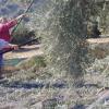 ASAJA-Jaén aplaude la reducción de peonadas pero recuerda al Ministerio que el agrícultor también sufre la caída de la producción, con pérdidas de cosecha y de renta de hasta el 80 %
