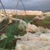 La fresa y las hortalizas de invernadero han sido los cultivos más perjudicados por el temporal en nuestra comunidad
