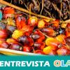 Greenpeace advierte de los peligros medioambientales y sociales que supone la producción y consumo masivo del aceite de palma