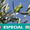 Se intensifican los controles para evitar la bacteria xylella en Andalucía y COAG pide tranquilidad