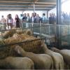 La Feria Agroganadera de Fuente Obejuna se celebrará la semana que viene con la novedad de un almuerzo de convivencia