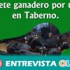 Taberno ofrece la posibilidad de disfrutar de una de los oficios más tradicionales con la iniciativa 'Ganadero por un día'
