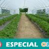 La escasez de agua y las condiciones laborales, principales retos en los invernaderos de Andalucía