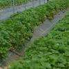 Agricultores se manifiestan en Albuñol por la conservación de los invernaderos cercanos a la costa