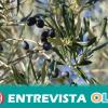 El sector aceitunero andaluz muestra tranquilidad ante el arancel anunciado por EEUU para la aceituna negra de mesa española