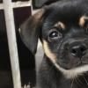 Málaga lucha contra el abandono animal con ayudas a protectoras y el fomento de la esterilización y las adopciones