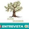 Nace Olivos Solidarios, una iniciativa para promover la cultura oleica y la conservación de los olivos centenarios además de ayudar a cuatro ONG
