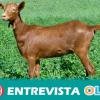 La Casa de la Cabra Malagueña ofrece ser cabrero o cabrera por un día para dar a conocer a esta especie autóctona y su importancia en el sector económico de la zona