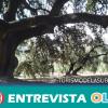 La ciudadanía de Lucena celebra el Día del Árbol con una ruta hacia la encina milenaria