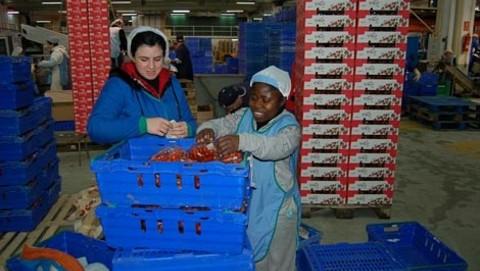 FAECA resalta al sector agroalimentario como el más estable para afrontar los retos de la crisis