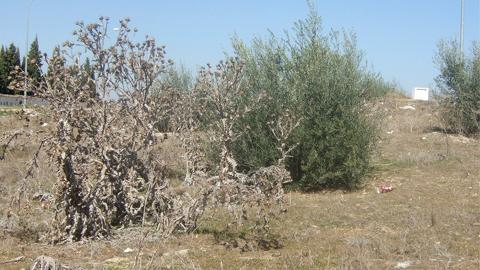 Alcaldes de la provincia de Jaén registran 25.000 firmas en el Congreso para reivindicar un Plan de Empleo Rural extraordinario que compense los efectos de la sequía