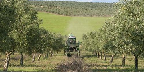 Las organizaciones agrarias COAG y Asaja y los sindicatos UGT y CCOO se reúnen con la Secretaría de Estado de Empleo para conseguir ayudas específicas para el campo andaluz