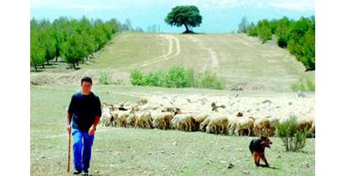 Más de 200 pastores colaboran en la prevención de incendios forestales con un mantenimiento sostenible y tradicional del monte mediterráneo andaluz