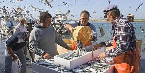 La Cofradía de Pescadores de Huelva recurre el reparto del boquerón por considerar que beneficia a la localidad gaditana de Barbate