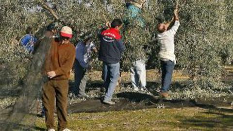 El Sindicato Andaluz de Trabajadores alerta de la grave situación de los jornaleros y jornaleras andaluces ante la falta de campañas agrícolas y las malas cosechas