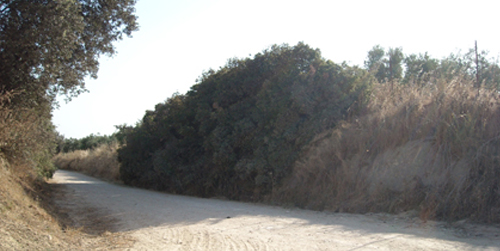 Las localidades cordobesas de Baena, Espejo, Nueva Carteya y Doña Mencía van a mejorar sus caminos rurales