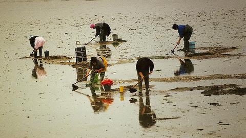 La zona de producción del municipio onubense de Punta Umbría se abre al marisqueo tras conocer los resultados de su control de calidad