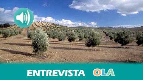Las organizaciones agrarias COAG, ASAJA y UPA en Andalucía debaten las necesidades más urgentes para el campo andaluz a las que debe enfrentarse la nueva Consejería de Agricultura y Pesca