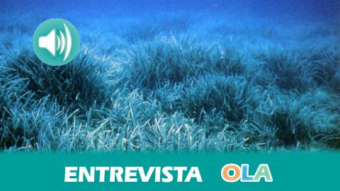 «Si destruimos las praderas de posidonia oceánica estamos destruyendo la vida en el mar», David Alarcón, coordinador de campañas Life-Posidonias Andalucía