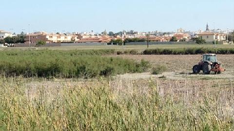Comienzan los trabajos de desbroce de la vegetación, tarajes y carrizos de la Laguna del municipio granadino de Torrox