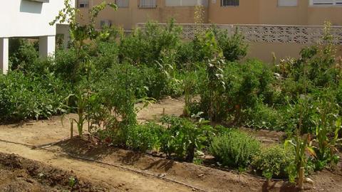 Las personas mayores y desempleados de Huércal de Almería tendrán prioridad para ser beneficiarios de los huertos urbanos ecológicos que se pondrán en funcionamiento