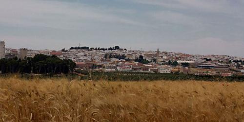 La Junta inicia dos nuevas expropiaciones de vivienda en Córdoba para evitar el desahucio de familias en riesgo de exclusión social