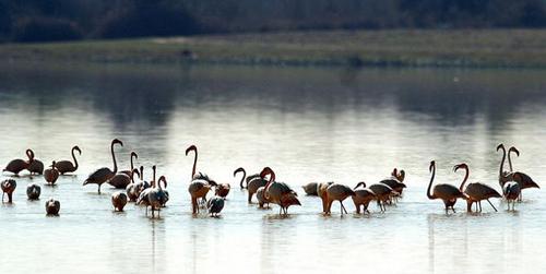La Junta de Andalucía propone ampliar en 14.000 hectáreas las fronteras del Parque Nacional de Doñana