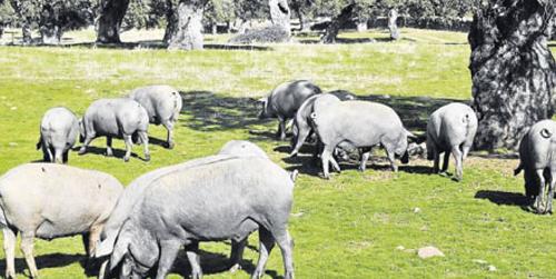 La provincia de Córdoba participa con 14 fincas al estudio y conservación de las dehesas andaluzas que lleva a cabo el proyecto 'Life' de la Consejería de Medio Ambiente