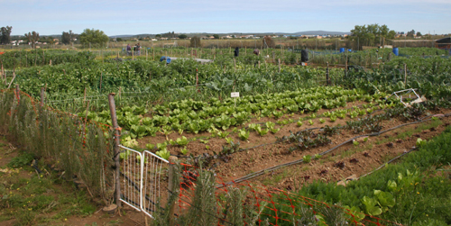 Los vecinos y vecinas de Guillena, Torre de la Reina y Las Pajanosas reciben 16 nuevos huertos urbanos municipales con el objetivo de fomentar la concienciación medioambiental recuperando espacios rústicos para su uso agrícola
