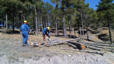 Olula del Río realiza trabajos de limpieza sobre 17 hectáreas de pino gracias a un proyecto de empleo forestal de la Junta de Andalucía