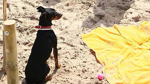 Fuengirola se convierte en la segunda localidad de Málaga en estrenar una playa canina para que las personas usuarias puedan acceder con sus animales a los más de 2.000 metros cuadrados de extensión