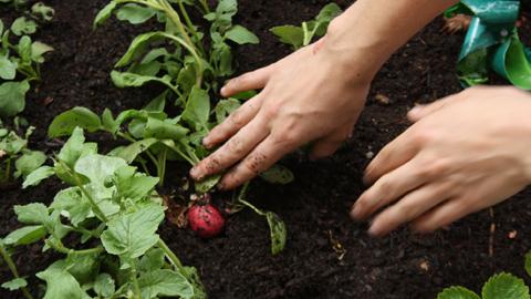 Clausurado el taller de empleo de horticultura de Arroyo del Ojanco con el que se ha formado a 12 jóvenes del municipio jiennense