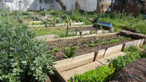 Los vecinos y vecinas de Cártama podrán cultivar en los huertos urbanos municipales a partir de este verano