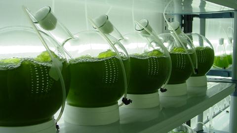 La iniciativa CO2 Algaefix de Arcos de la Frontera, pionera en la lucha contra el cambio climático al contar con la primera planta de microalgas del mundo destinadas a la captura y biofijación de CO2