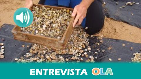 «Los estudios sobre una toxina que impide el consumo humano de coquinas son falsos», Juan Grao, presidente de la Asociación de Mariscadores de Canela, en Ayamonte (Huelva)