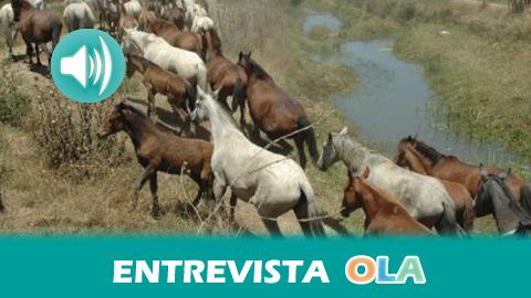 «Cada año nos visita más gente con motivo de la recogida de las yeguas, una tradición centenaria que se remonta a los tratos con el ganado», Francisco Luis Martín, presidente de la Asociación Ganadera Marismeña de Hinojos (Huelva)