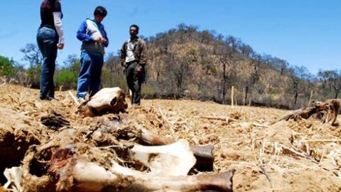 Declaran el estado de emergencia en más de 900 municipios bolivianos por la grave sequía que afecta al país y que también está provocando pérdida de ganado