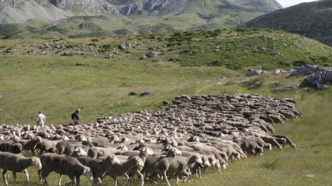 71 explotaciones ganaderas trashumantes mayormente de la zona de la Sierra de Segura, reciben 290.000 euros en ayudas de la Diputación de Jaén
