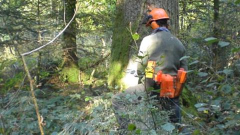 El IES San José de Cortegana ofertará el próximo curso un nuevo ciclo de Formación Profesional Básica sobre aprovechamientos forestales, convirtiéndose en el único centro onubense que imparta dicha titulación