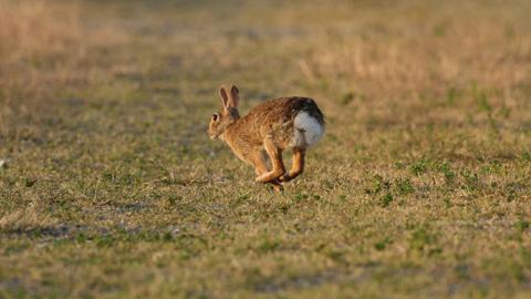 32 localidades cordobesas se encuentran en estado de emergencia por riesgo de daños en la agricultura, cuatro más que el año pasado, debido a la proliferación de la población del conejo silvestre