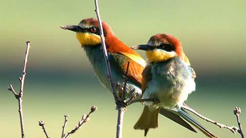 Las personas aficionadas a la ornitología ya pueden disfrutar un nuevo observatorio desde el que se pueden avistar alrededor de 190 especies distintas de aves en la localidad malagueña de Pizarra