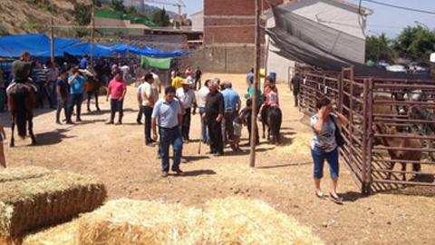 Gran éxito de participación de ganaderos y visitantes en la tradicional Feria del ganado de Burunchel, término municipal de La Iruela, acompañada también en esta edición por un mercado medieval