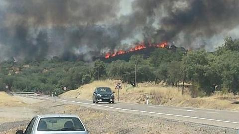 El elevado número de incendios forestales y conatos producidos durante este verano en la localidad sevillana de El Ronquillo han calcinado un total de veinte hectáreas, una cifra inferior a la esperada