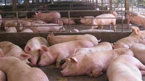 Los ganaderos y ganaderas de Almargen buscan sistemas de eliminación de purines para acabar con la contaminación y los malos olores que están afectando a los vecinos y vecinas de la localidad
