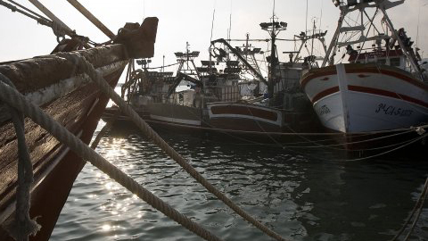 El sector pesquero de la localidad gaditana de Barbate que faenan en las aguas del Golfo de Cádiz pretende alargar temporalmente la cuota de boquerones de este año ante el inminente cierre del caladero