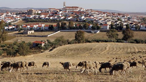 Fuente Obejuna contará con un nuevo Consejo Local Agrario para facilitar la participación de agricultores y ganaderos en cuestiones municipales y en la organización de la Feria Agroganadera