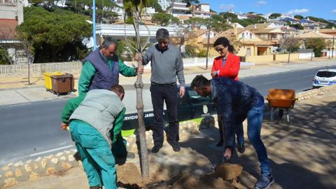 Las zonas verdes de Palos de la Frontera se amplían con nuevas palmeras y setos por medio de la iniciativa ambiental 'Un árbol cada día', que pretende concienciar sobre la importancia de preservar el medio ambiente