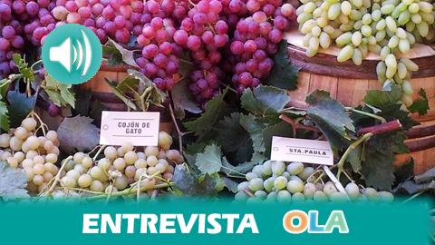 Almería celebra la XI Muestra de Variedades Históricas de Uva de Mesa, un evento homenaje a sus parraleros más antiguos y a los jóvenes agricultores de la vid
